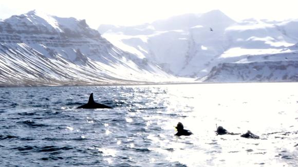 Karina mergulhando com as orcas