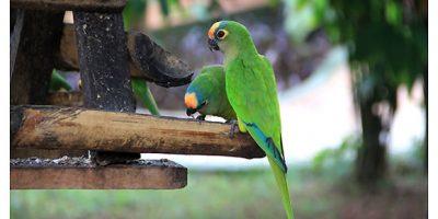 Aves em Bonito MS