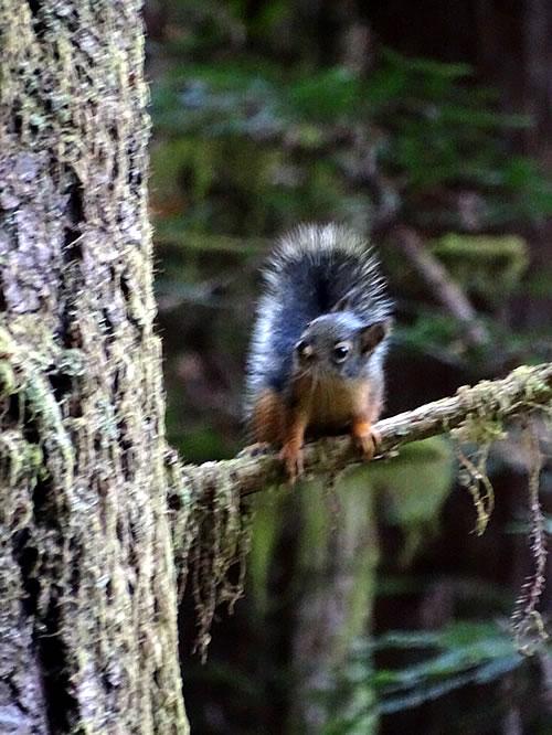 Parque Redwoods