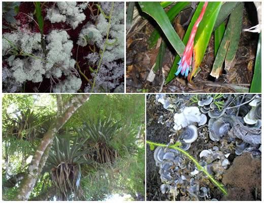 flora pedra do sino